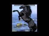 Далеко, далекоо, ускакала в поле молодая лошадь...